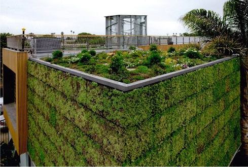 Bricault-residence-green-roof