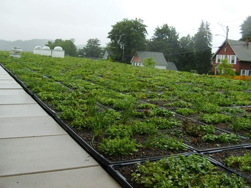 Hannaford-green-roof