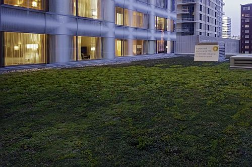 Olive-8-greenroof-8355sf