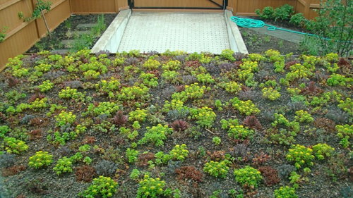 Yannell-house-green-roof