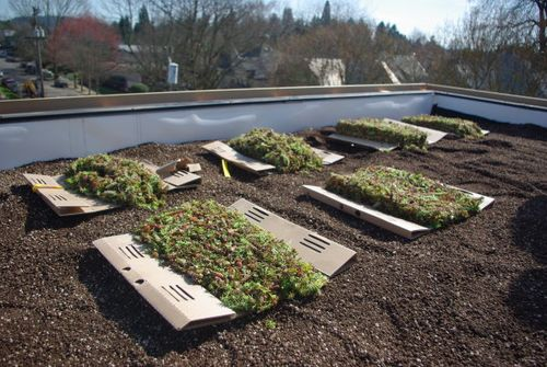 Harpoon-house-eco-roof-sedums