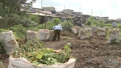 Nairobi-urban-farming-food-sacks