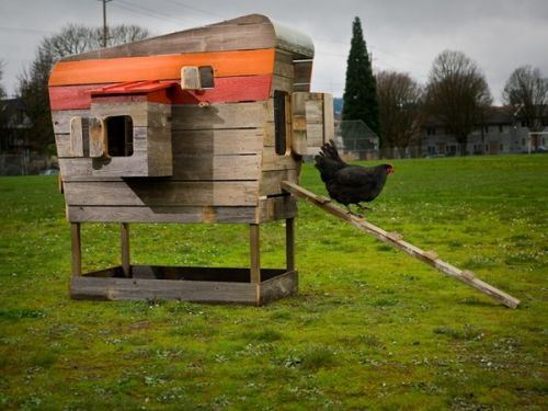 Modern-coop-reclaimed-cedar-chicken