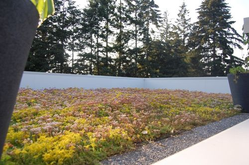Ecube-green-roof