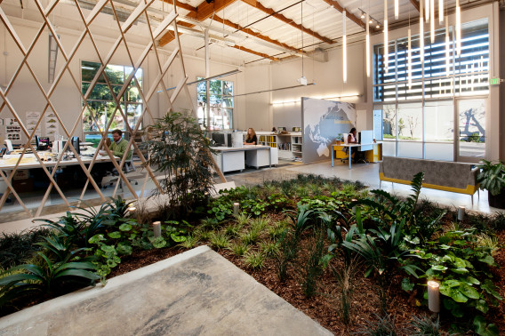 Hayden Place Architectural Office Indoor Plants