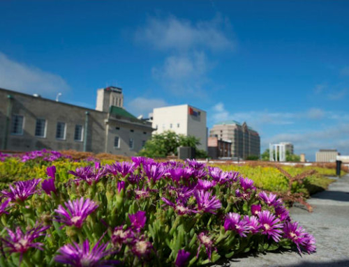 Xero Flor America Green Roof Named in GreenRoofs.com Project of the Week