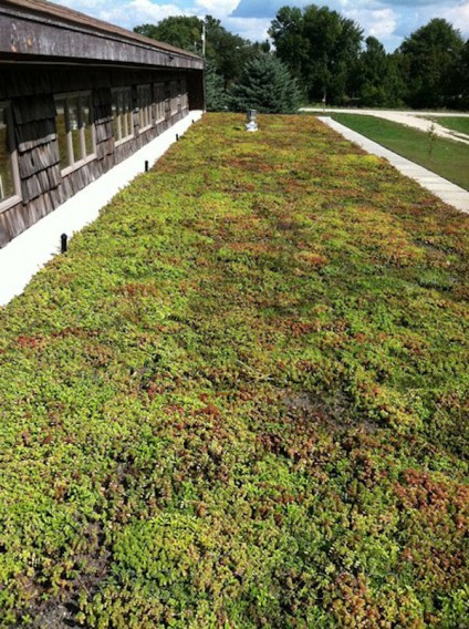 Green-Roof-System-Xero-1