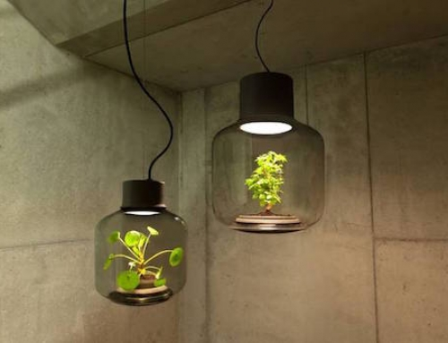 These Greenhouse Lamps will Brighten Any Room