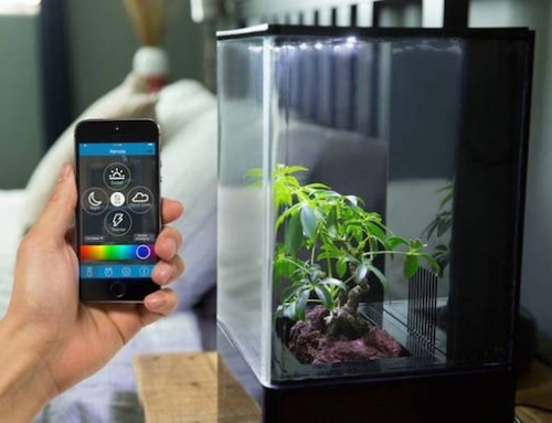 Small Hydroponics System Brings Clean Air and Greenery to Your Home or Office