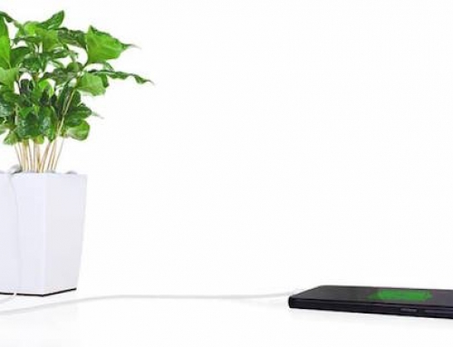 This Plant Will Charge Your Phone