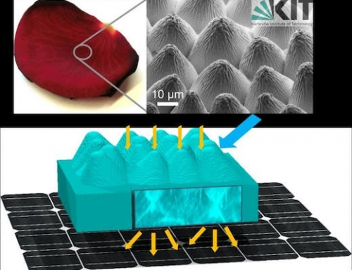 Roses Inspire a More Efficient Solar Cell