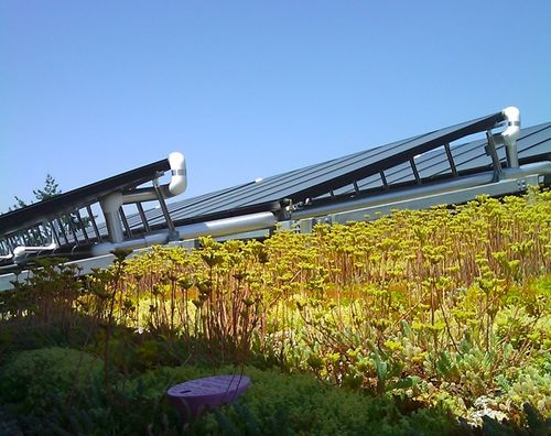 Green Roof Cropped