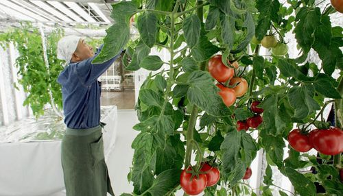 Urban Farms Around the World [CNN]
