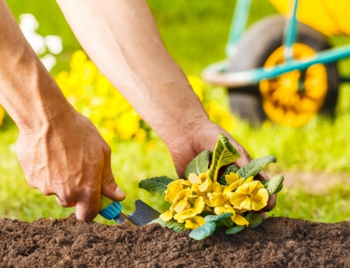 Creating a Green Yard the Sustainable Way